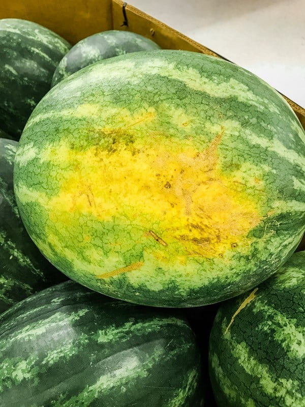 Large field (yellow) spot on watermelon.
