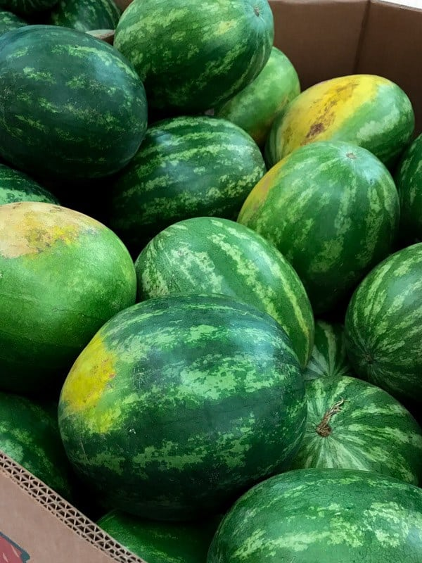 Bin of ripe watermelons.